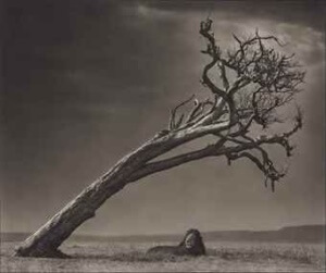 Nick Brandt (b. 1966) Lion Under Leaning Tree, 2008 Archival pigment print. Signed, dated and numbered '14/15' in pencil (margin) image: 38 3/8 x 46 in. (97.4 x 116.7 cm.) sheet: 40 x 47 ½ in. (101.6 x 120.6 cm.)Est: £10,000-15,000 Christies: Photographs, London Auction 20 May 2026