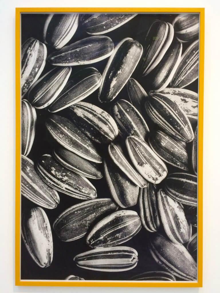 Laura Aldridge, Four weeks ago (Seeds), 2016
